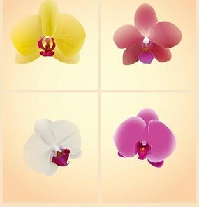 四款蝴蝶兰矢量绘画