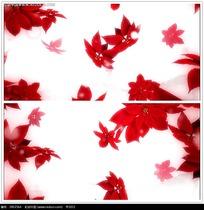 红色枫叶背景视频