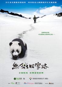 熊猫回家路电影海报PSD模板