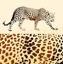 豹子矢量图