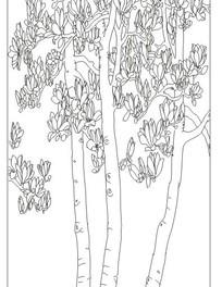 木兰花传统图案线稿
