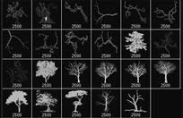 树木树干PS笔刷下载