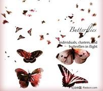高清晰蝴蝶PS笔刷下载