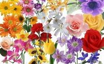 鲜花朵朵素材大全