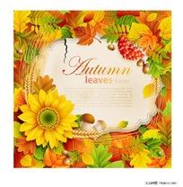 秋天金黄色的相框