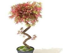 常用盆栽植物-3D素材