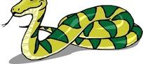 手绘一条盘着的毒蛇