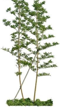 种植在绿色草地上的小树照片