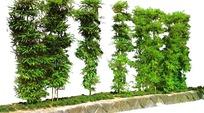 城市竹林绿化带抠图素材