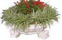 种满鲜花和吊兰的白色景观花坛抠图素材
