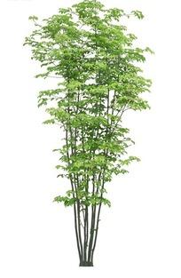 秀丽的绿色树木PSD抠图素材
