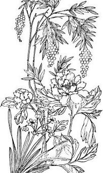 中国古典图案-牡丹和竹叶构成的图案