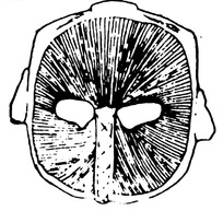 一个面具的里面
