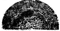中国古典图案-斑驳线条构成的半圆形图案