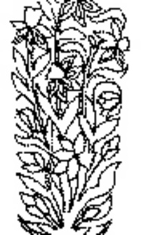 中國古典圖案-復雜葉子花朵圖案