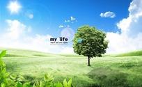 蓝天白天下草地上的一颗小树