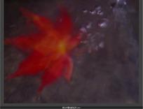 泉水中飘动的红叶