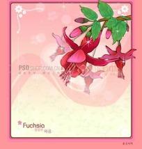 粉色背景上的粉色边框和灯笼海棠插画