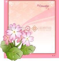 粉色背景上的粉色边框和黄花九轮草插画
