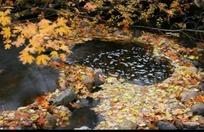 林中小溪上漂浮的落叶