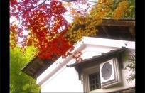 瓦房上散落的枫叶