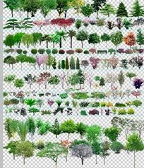 ps园林植物大全