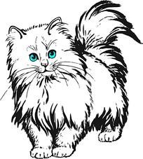 波斯猫图片