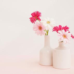 花瓶中的菊花淘宝主图背景