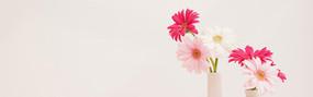 菊花和花瓶淘宝海报背景
