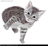 灰色小猫咪