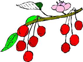 樱桃线描矢量图形