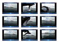 海豚跳跃视频