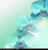 淡蓝色花朵矢量背景