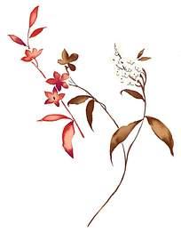 水彩印花素材