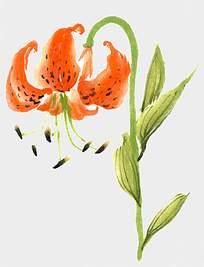 橘色艺术花朵水墨背景素材